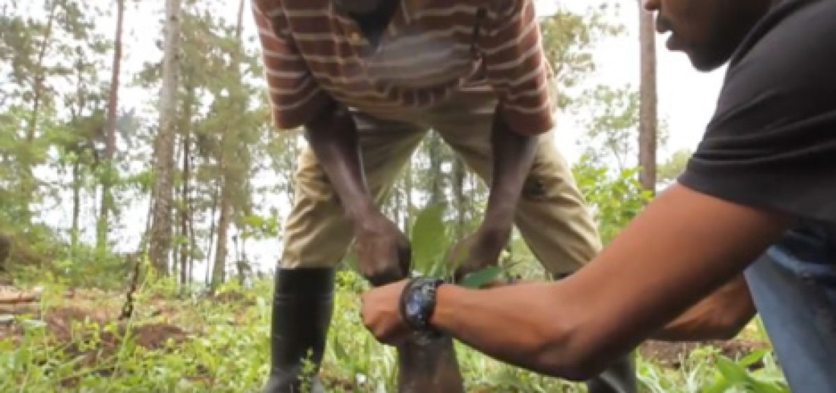 A coffee farmer in Haiti is shown better production methods to improve yields.